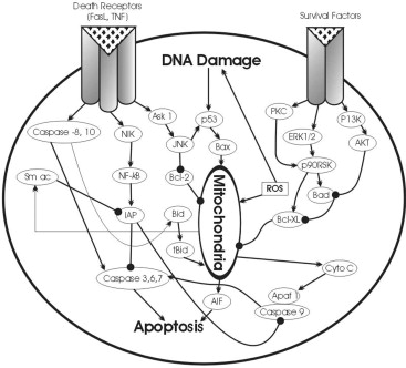 Metals And Apoptosis Recent Developments