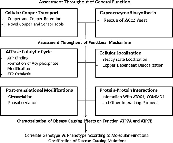 Copper mediated neurological disorder: Visions into
