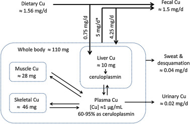 Dietary copper and human health: Current evidence and