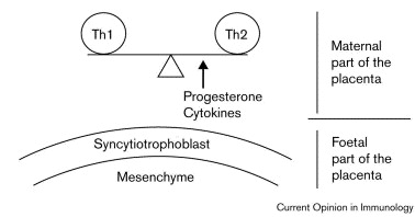 Ways Support The Ten A Tolerance 'graft' Foeto-placental To