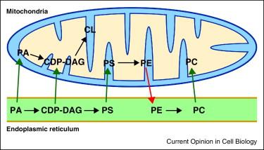 Membrane contact sites, gateways for lipid homeostasis