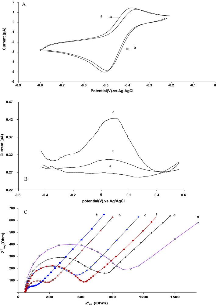 Development Of Dna Electrochemical Biosensor Based On Immobilization