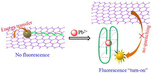 Detection Of Lead Ii With A Turn On Fluorescent Biosensor Based