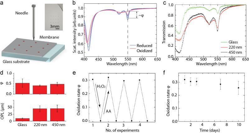 Portable oxidative stress sensor: Dynamic and non-invasive