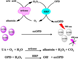 Rapid and highly-sensitive uric acid sensing based on enzymatic