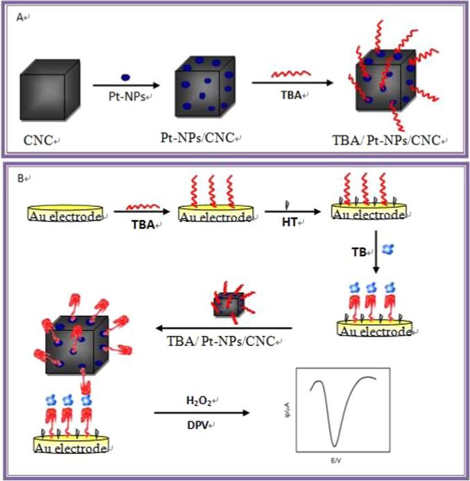 A sensitive sandwich-type electrochemical aptasensor for thrombin ...