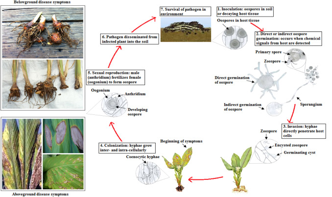 Fungal disease detection in plants: Traditional assays