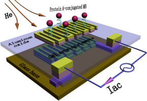 Magnetic impedance biosensor: A review