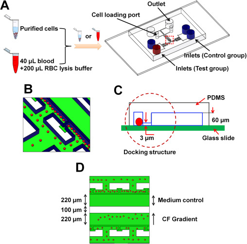 Mkit a cell migration assay based on microfluidic device and fig 3 ccuart Image collections