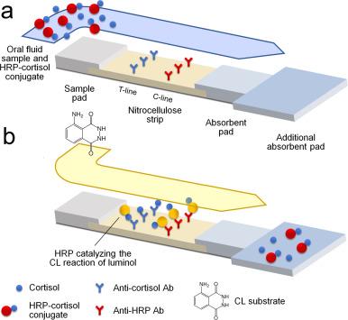 Chemiluminescence-based biosensor for monitoring astronauts