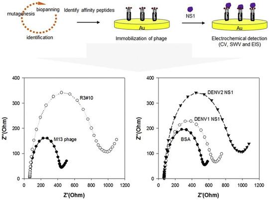 Electrochemical biosensing of mosquito-borne viral disease