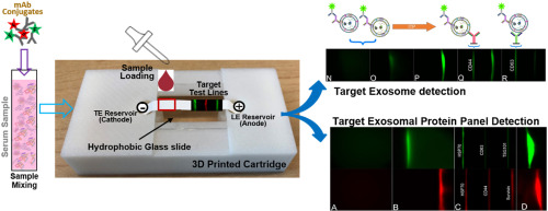 Paper Based Itp Technology An Application To Specific Cancer Derived Exosome Detection And Analysis Sciencedirect