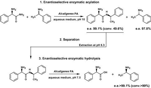 resolution of 1 phenylethylamine