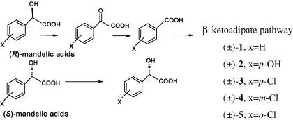 Preparation of (S)-mandelic acids by enantioselective
