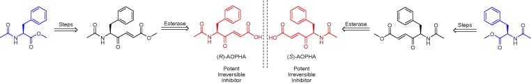 Peptidylglycine alpha-amidating monooxygenase mechanism