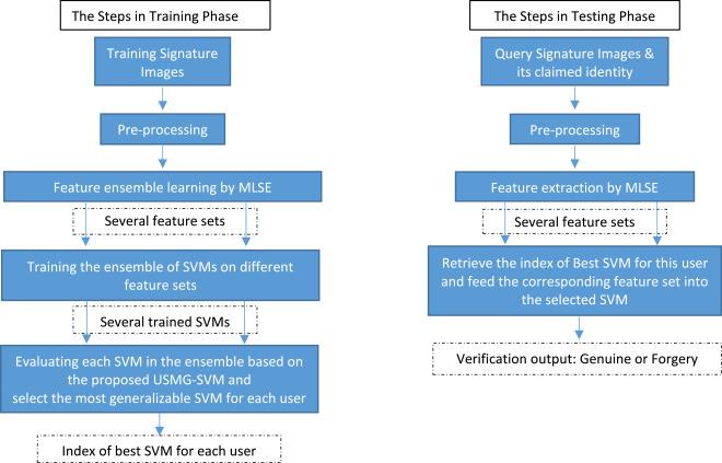 Multi-representational learning for Offline Signature