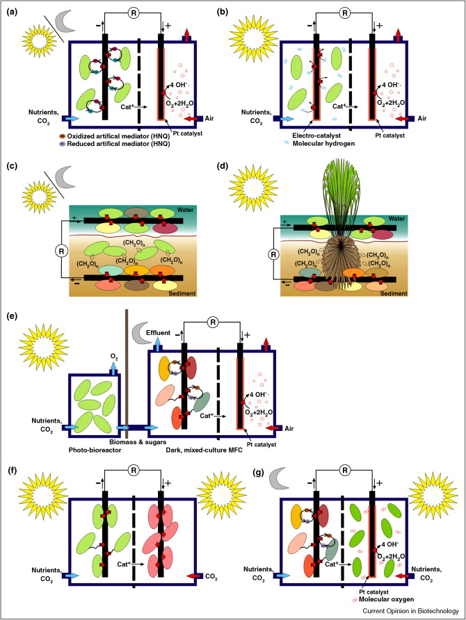 Light Energy To Bioelectricity Photosynthetic Microbial Fuel Cells