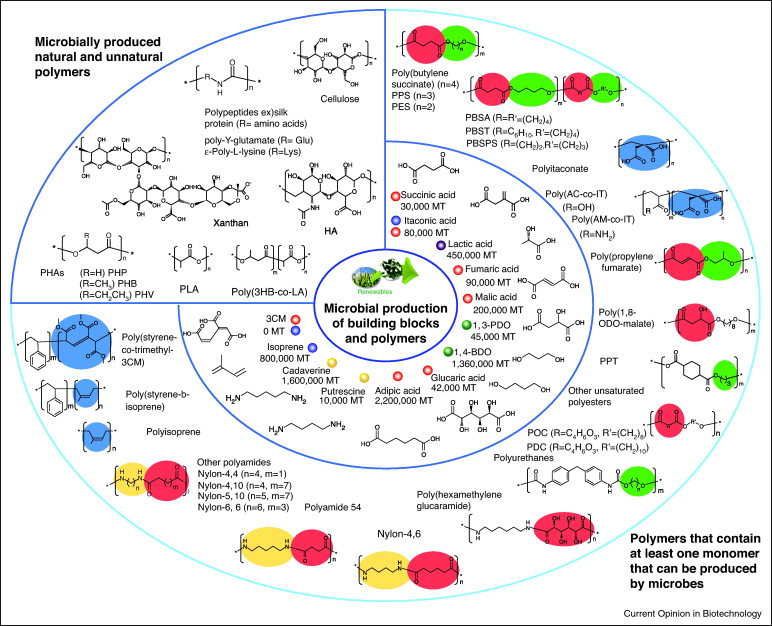 Microbial production of building block chemicals and