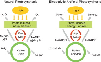 Nanobiocatalytic assemblies for artificial photosynthesis graphical abstract ccuart Gallery