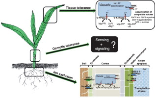 Study of field crops