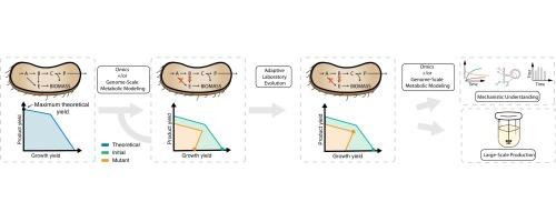 DMPK Study in Rats