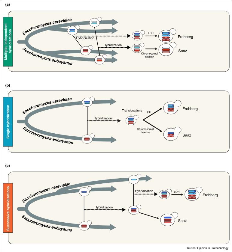 Origins, evolution, domestication and diversity of
