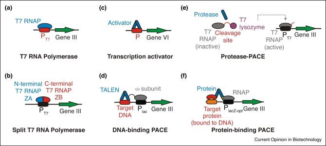 conclusion of biomolecules