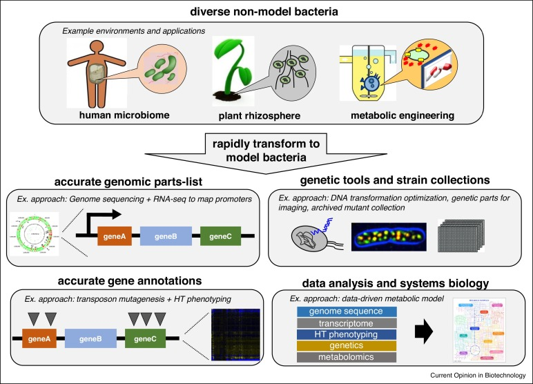 Rapidly moving new bacteria to model-organism status