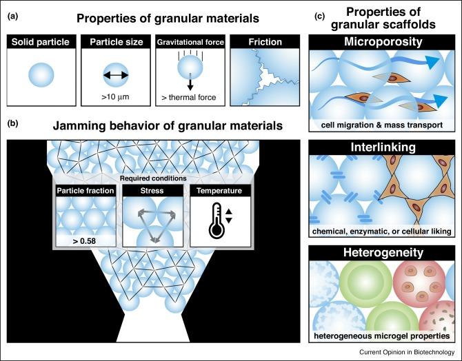 Granular hydrogels: emergent properties of jammed hydrogel