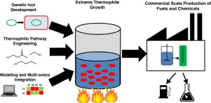 Extreme thermophiles as emerging metabolic engineering
