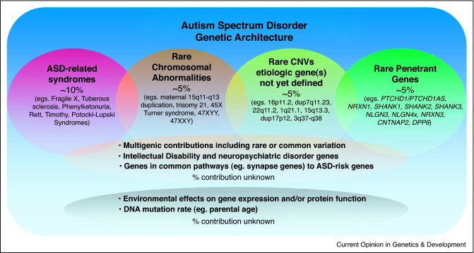 Autism Spectrum Disorder Linked To >> Genetic Architecture In Autism Spectrum Disorder Sciencedirect