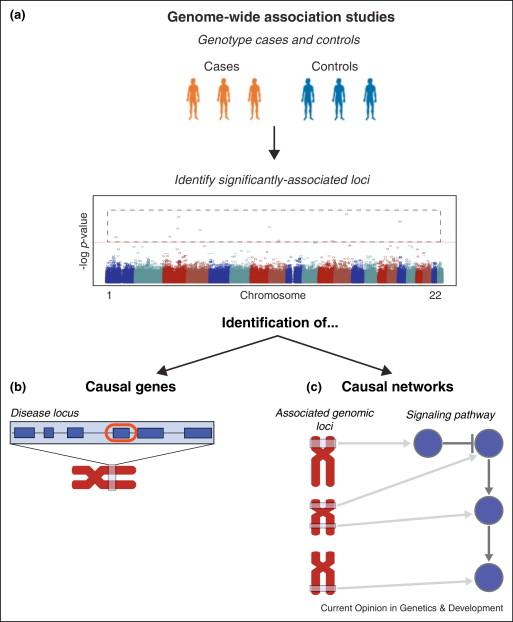 Network Analysis Of Gwas Data Sciencedirect