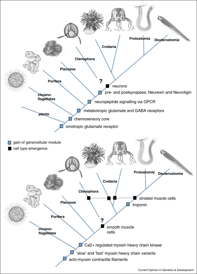 Structural Evolution Of Cell Types By Step Wise Assembly Of Cellular