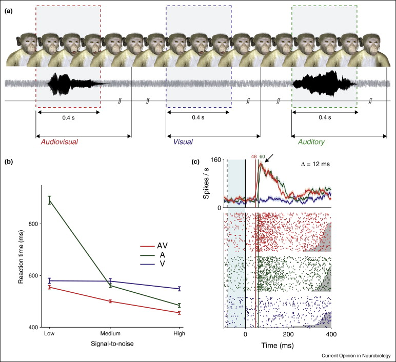 The neurobiology of primate vocal communication - ScienceDirect