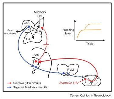 1 s2.0 S095943881730106X gr2 dysregulation of aversive signaling pathways a novel circuit  at gsmportal.co