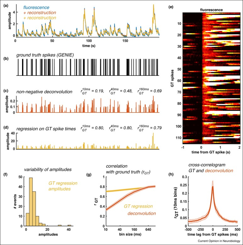 Computational processing of neural recordings from calcium