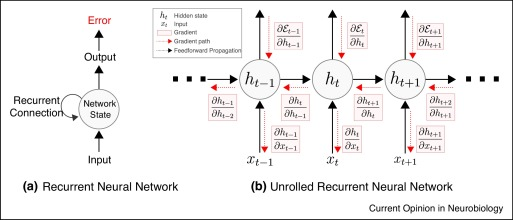 Backpropagation through time and the brain