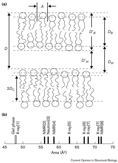 Lipid Bilayer Structure Sciencedirect