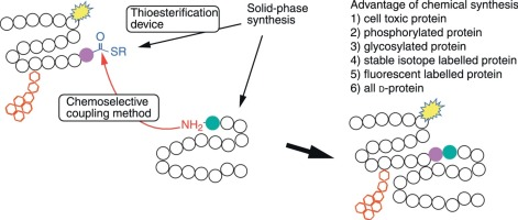 recent progress in the chemical synthesis of proteins sciencedirect