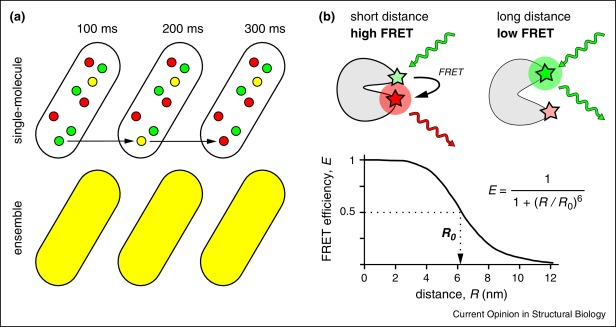 taking the ruler to the jungle single molecule fret for