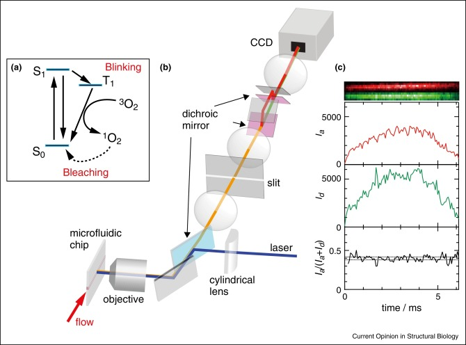 Where the complex things are: single molecule and ensemble