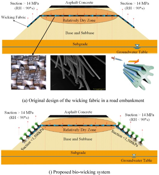 A Bio Wicking System To Dehydrate Road Embankment Sciencedirect