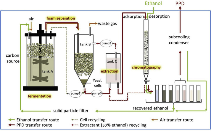 An Integrated Bioprocess For Fermentative Production Of Protopanaxadiol By Recycling Ethanol Waste During Down Stream Extraction Process Sciencedirect