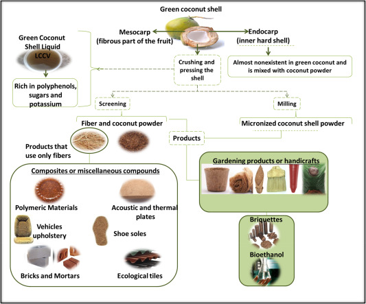 Waste Green Coconut Shells Diagnosis Of The Disposal And