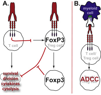 Rationale for anti-OX40 cancer immunotherapy - ScienceDirect