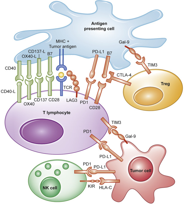 Biological mechanisms of immune escape and implications for