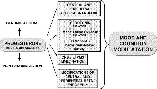 Progesterone and progestins: Effects on brain