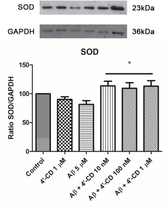 4′-Chlorodiazepam is neuroprotective against amyloid-beta in