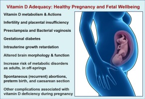 Vitamin D Deficiency During Pregnancy >> Vitamin D Effects On Human Reproduction Pregnancy And Fetal Well