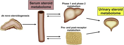 How I Improved My anabolic steroids examples In One Day